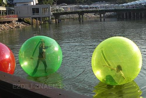 Зорбинг в зоопарке Чиангмая: властелины шаров